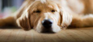 PVC Vloeren. Ook uw hond zou het geweldig vinden.